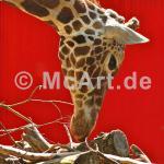 Giraffe 250g/m²,Fotopapier-Satin, seidenmatt
