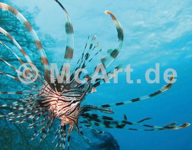 Unterwasserwelt I -