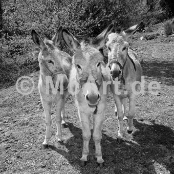 Trio -