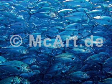 Unterwasserwelt III -