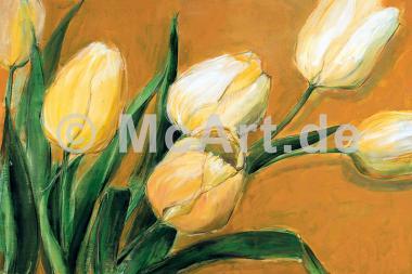 Tulipa Nova -