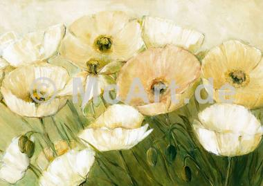 Tender Poppies