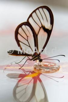 Butterfly Beauties III -