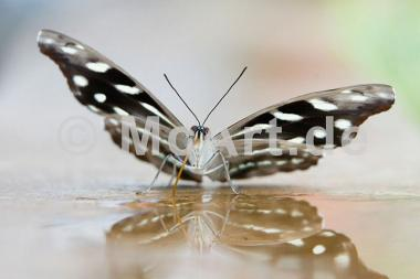 Butterfly Beauties VI -