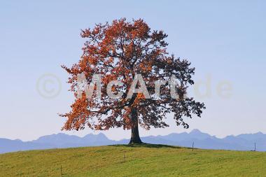 Der Baum -