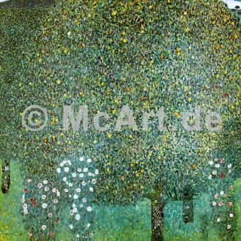 Rosensträucher unter Bäumen -