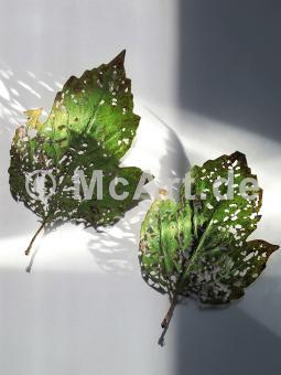 Zwei Blätter -
