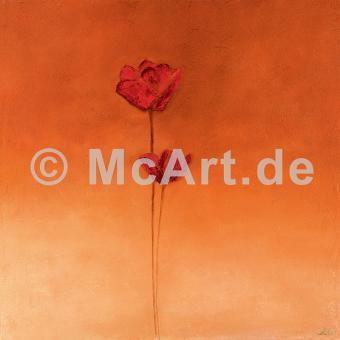 Poppy Elegance II -