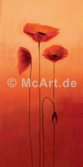 Poppy Elegance III -