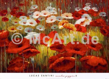 Meadow Poppies II
