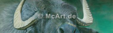 Buffalo -