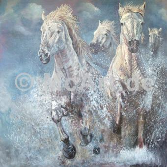 Wild horses of the camargue -