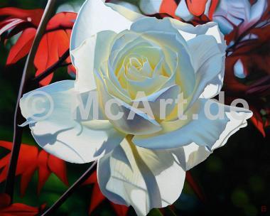 Summer's Last Rose -