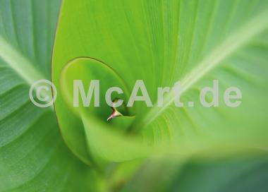 Leaf 2 -