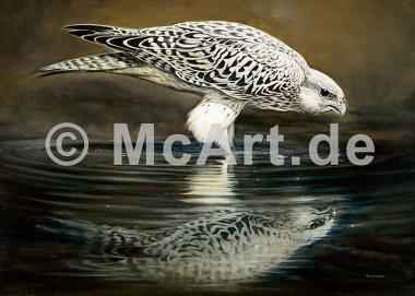 Drinking Falcon