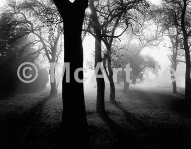 Bäume im Nebel I -