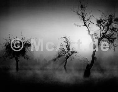 Bäume im Nebel II -