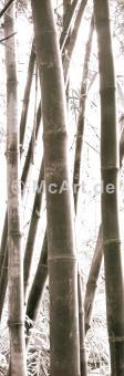 Bamboo Grove IV
